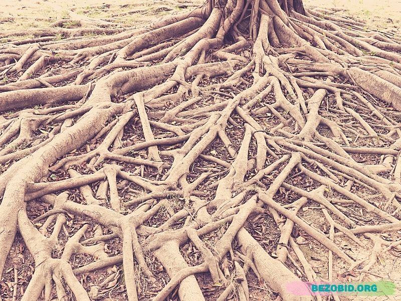 подсознательные корни обиды и турбо-суслик